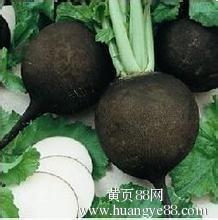 进口黑珍珠樱桃萝卜种子保健蔬菜种子图片