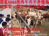 北京海淀肉牛犊价格