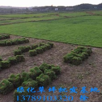 郴州市苏仙区绿溪苗圃
