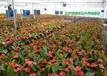 总部基地绿植花卉租赁公司