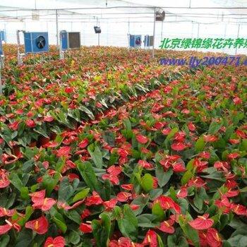 北京绿锦缘园艺有限公司