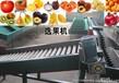 台湾蜜枣重量分选机器,分选青枣大小的机器,青枣自动分选机厂家
