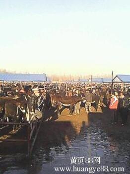 东北活驴交易市场