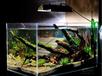 廣州魚缸供應商,廣州訂做超白玻璃魚缸,廣州超白魚缸造景設計,廣州專業訂做超白魚缸