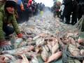 浙江杭州查干湖鱼销售杭州有卖查干湖鱼的图片