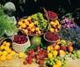 鮮活水果進口報關代理/廣州水果進口清關公司