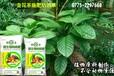 出口微生物有机肥,深圳专供东南亚生物有机肥,深圳有机肥厂家