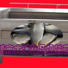 大洋制造经济型鲳鱼脱鳞机/先进技术黄花鱼脱鱼鳞设备图片