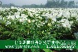 北京承雨观赏牡丹苗价格多少钱