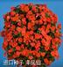 国外植物种子如何包税进口?国外植物种子进口代理
