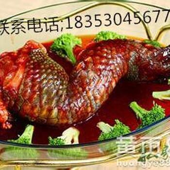 出售鳄鱼肉活体