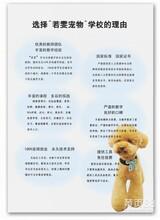 北京海淀学习宠物美容要多少钱