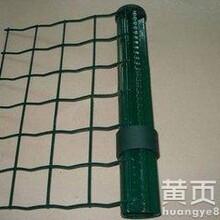 厂家供应6x6荷兰网、铁丝网、果园围栏网量大从优