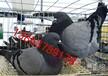 肉鸽养殖大棚建设肉鸽养殖最新技术肉鸽养殖场