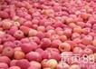 红富士苹果产地红富士价格