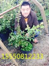 泰安果树苗新品种果树苗木各种名优特果树苗繁育基地