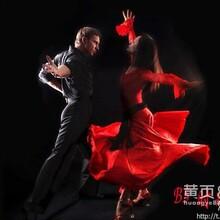 东营拉丁舞东营拉丁舞培训东营舞蹈培训东营舞蹈学校