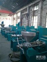 新疆花生榨油机少强机械大豆花生榨油机图片