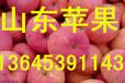 万亩红富士苹果/山东红富士苹果产地直销
